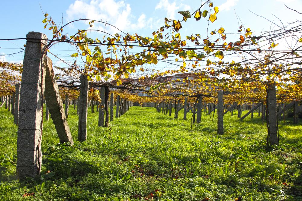 Белые вина Испании Белые вина Испании: история, лучшие сорта и стили, практические советы по выбору 1albarino