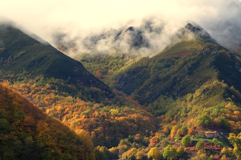 Буковые леса Испании Буковые леса Испании 11