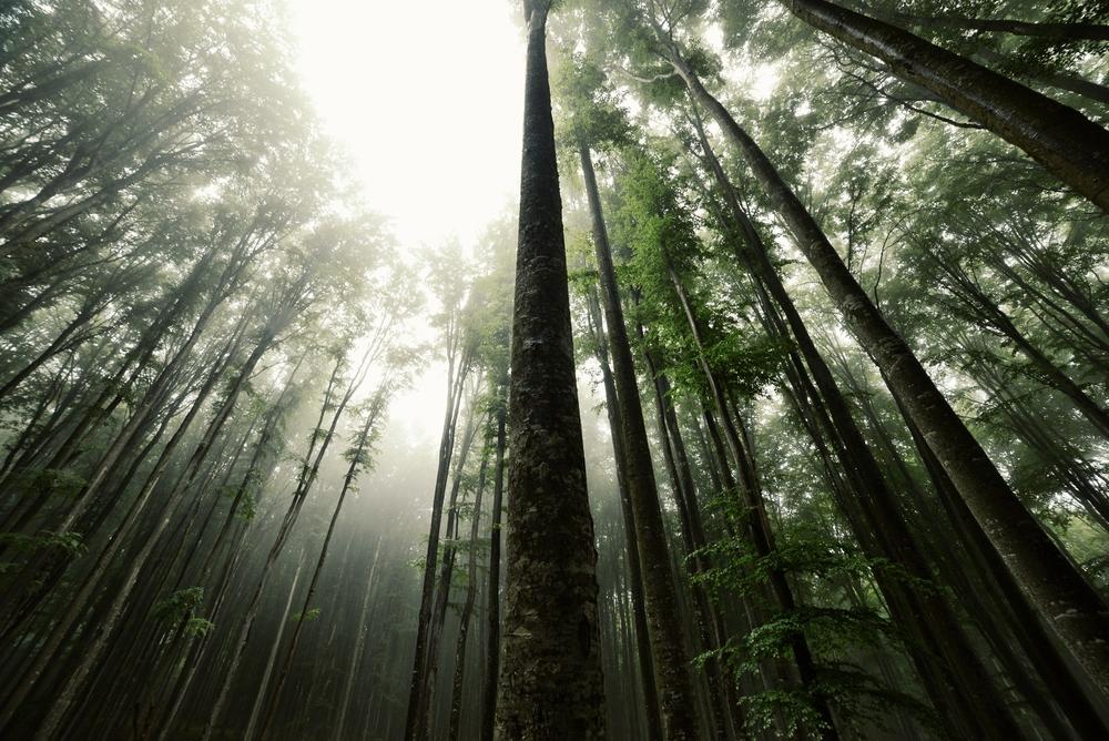Буковые леса Испании Буковые леса Испании 2