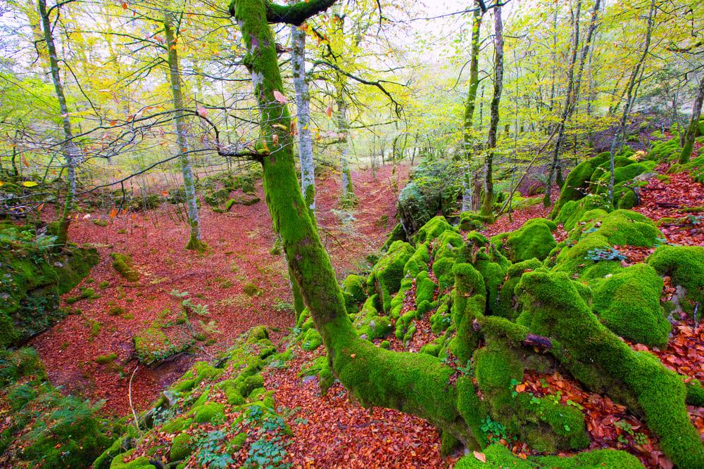 Буковые леса Испании Буковые леса Испании 3