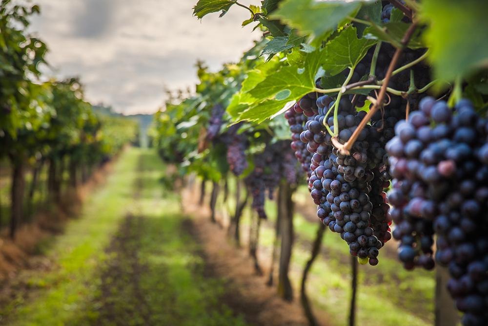 Как правильно выбирать испанские вина Как правильно выбирать испанские вина – очень подробная и пошаговая инструкция 6