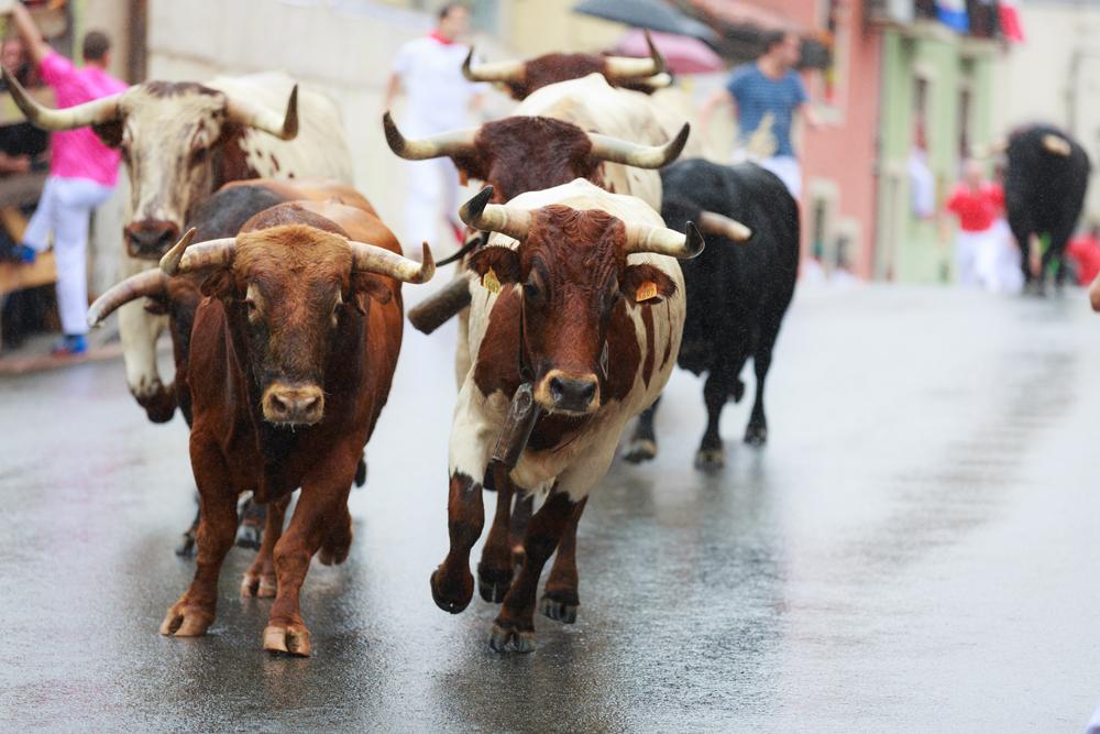 еда Испании Мясные традиции Испании – от производства до адресов лучших стейк-ресторанов 9bulls