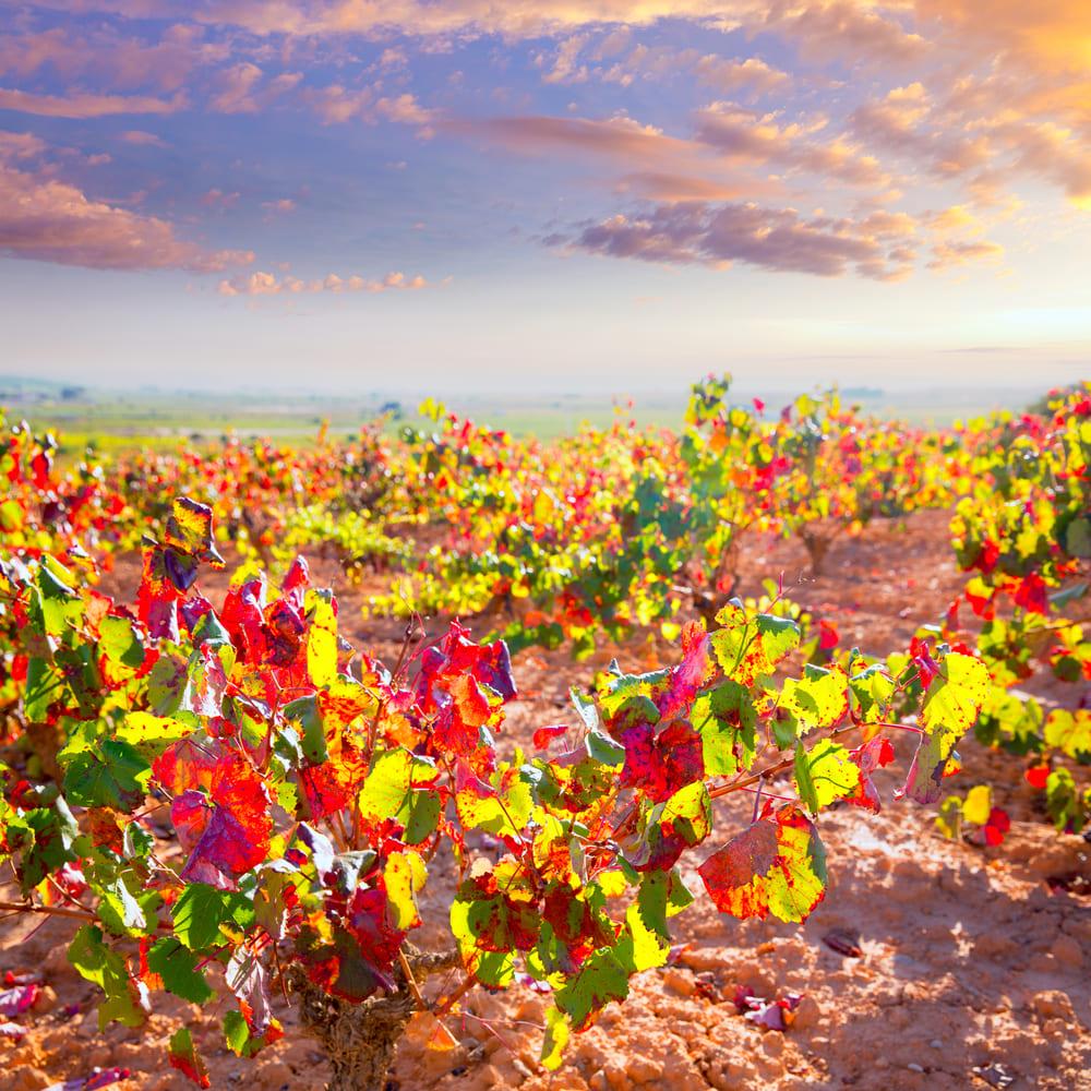 винный туризм Осень в Испании: места для винного туризма 2