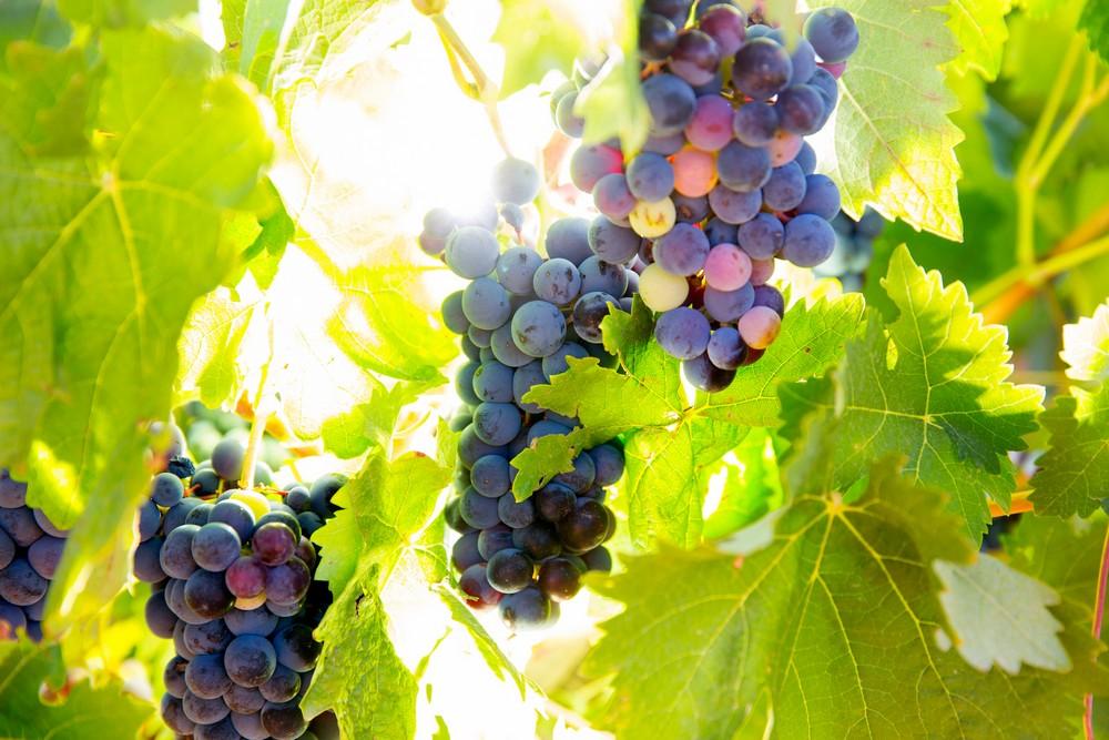 Валенсианский  винный туризм Валенсианский и Аликантийский винный туризм – от истории до современности 3