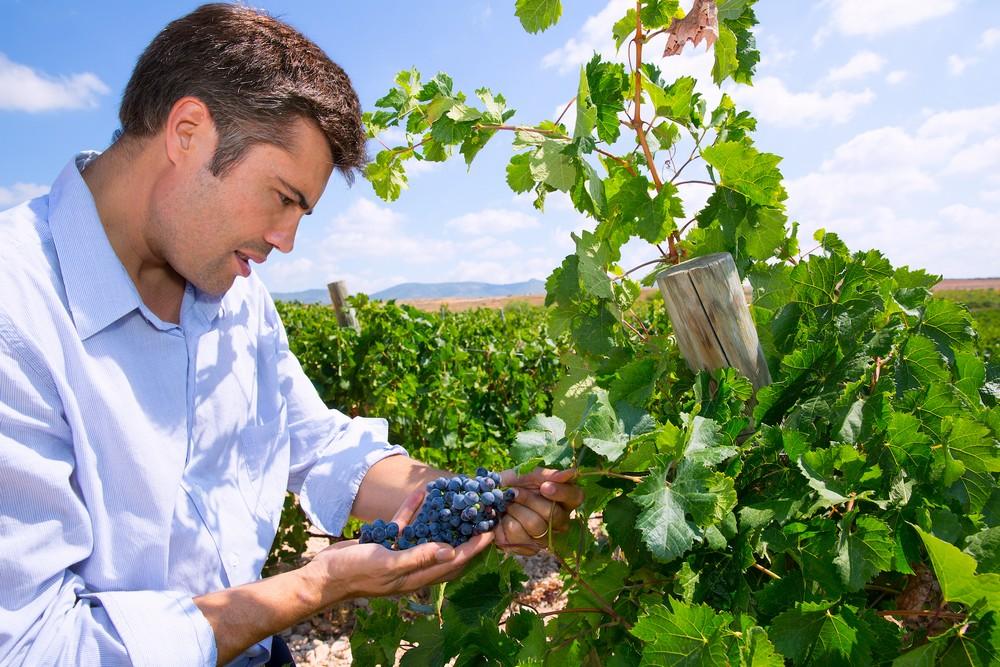 Валенсианский  винный туризм Валенсианский и Аликантийский винный туризм – от истории до современности 4